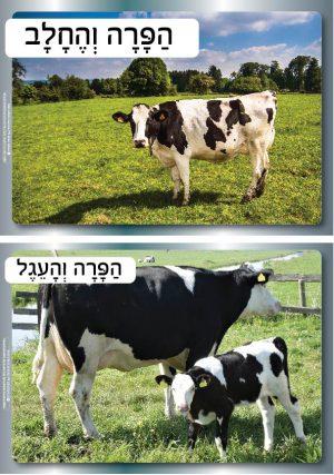 הפרה והחלב – 8 תמונות מרהיבות על ייצור החלב