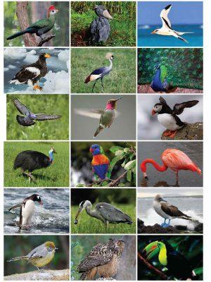 מרכז למידה – התאימו כרטיסים למשפחות העופות והחרקים.