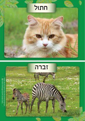 4 משפחות בעלי החיים + 16 תמונות מרהיבות + כותרות